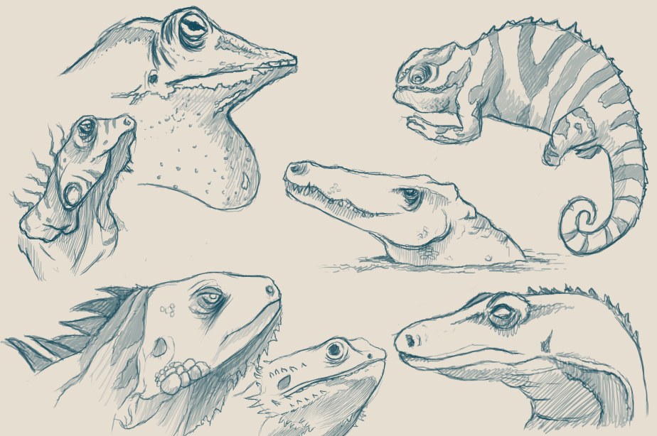 REPTILE_HEAD_SKETCHES
